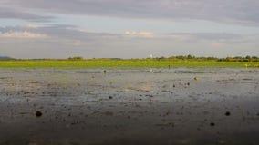 Danube delty bagna w ruchu zbiory