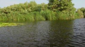 Danube delty bagna w ruchu zdjęcie wideo