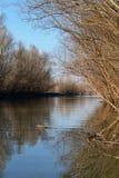 Danube floodplain obrazy stock