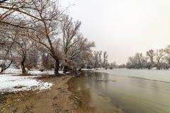 Danube island Šodroš near Novi Sad, Serbia. Colorful landscape with snowy trees, beautiful frozen river. Danube island Šodroš near Novi Sad, Serbia royalty free stock photography