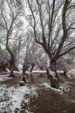 Danube island Šodroš near Novi Sad, Serbia. Colorful landscape with snowy trees, beautiful frozen river. Danube island Šodroš near Novi Sad, Serbia royalty free stock photos
