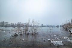 Danube island Šodroš near Novi Sad, Serbia. Colorful landscape with snowy trees, beautiful frozen river. Danube island Šodroš near Novi Sad, Serbia stock photos