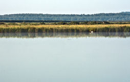Danube Landscape with a Bird on the Water Stock Photography