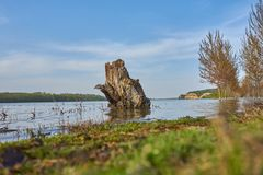 Danube landscape with a log in the foreground. And generic vegetation on shore and trees in a flooded area royalty free stock photography