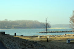 Danube and Morava river confluence near Bratislava city with tree in winter Stock Image