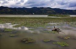 Danube River 4 Fotografering för Bildbyråer