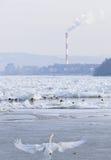 Danube River congelado em Belgrado, Sérvia Fotografia de Stock Royalty Free