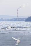 Danube River congelado em Belgrado, Sérvia Fotos de Stock Royalty Free