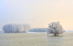 Danube river and frosty trees. In morning time Royalty Free Stock Photos