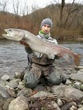Danube salmon hucho fishing in central Europe stock photos