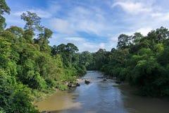 Free Danum Valley Lowland Dipterocarp Forest Borneo Stock Photography - 78275822