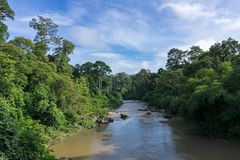 Danum Valley Lowland Dipterocarp Forest Borneo Stock Photography