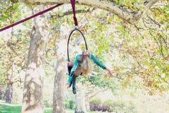 Danza aérea del aro de la mujer en bosque Imágenes de archivo libres de regalías