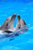 Danza de delfínes Foto de archivo libre de regalías