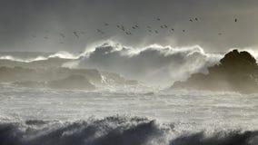 Danza de las gaviotas sobre el mar tempestuoso Fotografía de archivo