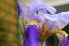 Danza de un iris Imagenes de archivo