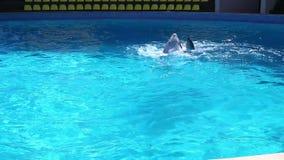 Danza del delfín metrajes