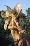 Danza del sauce del bosque Imagen de archivo libre de regalías
