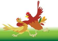 Danza realizada por el gallo y la gallina Fotos de archivo
