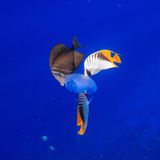 Danza subacuática Imagen de archivo libre de regalías