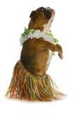 Danzatore del cane Fotografia Stock
