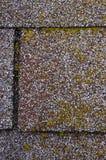 Daño del molde/del musgo en ripias de la azotea Foto de archivo libre de regalías