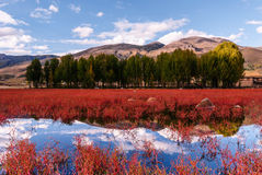 Daocheng rode grasspot stock afbeelding