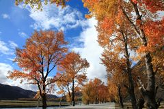 Daocheng's Autumn Royalty Free Stock Photography