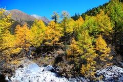 Daocheng Yading, uma reserva natural do nível nacional em China Foto de Stock