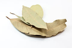 Daphne leaves Royalty Free Stock Photography
