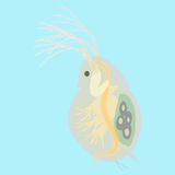 Daphnia - kleines planktonic Tier stock abbildung