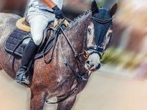 Dapple το γκρίζοι άλογο και ο αναβάτης εκπαίδευσης αλόγου σε περιστροφές στο ομοιόμορφο άλμα εκτέλεσης παρουσιάζουν πηδώντας αντα Στοκ Εικόνες