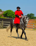 Dapple el caballo gris que es ejercitado, jinete que lleva el traje isabelino Fotografía de archivo