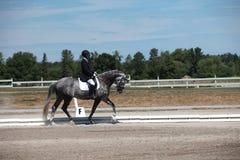 Dapple el caballo y al jinete grises del Dressage en una demostración Imagenes de archivo