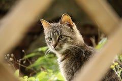 Dapple el gatito gris Foto de archivo