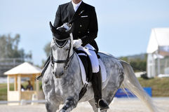 Dapple grey dressage horse. Dapple grey horse cantering in the dressage competition warm up Royalty Free Stock Images