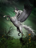 Dapple Grey Pegasus. A dapple grey pegasus takes to flight from a forest knoll with huge wing beats Stock Photo