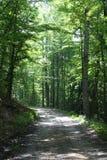 Dappled задняя проселочная дорога через лес стоковые фото