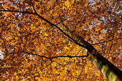 Dappled autumn sun light Royalty Free Stock Photos