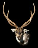 Dappled deer. Hunting trophy - izolated on black royalty free stock photography
