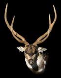 Dappled deer Royalty Free Stock Photography