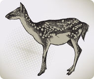 Dappled deer, hand-drawing. Vector illustration Stock Photos