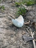 Dappled egg shell after hatching. Dropped on the ground from the nest Stock Images