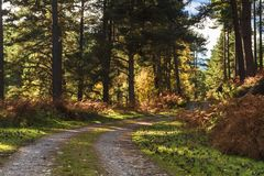 Dappled Forest Track. Dappled light on a track through a forest in Speyside, Scotland. 20 October 2018 royalty free stock images