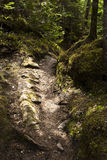 Dappled Path. Well-worn Forest Path Dappled in Sunshine Royalty Free Stock Photos