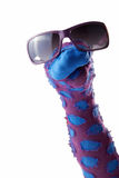 Dappled sock puppet with sunglasses. Isolated on white background Stock Photography