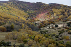 The dappled sunlight color on the hillside in autumn is very beautiful Royalty Free Stock Photo