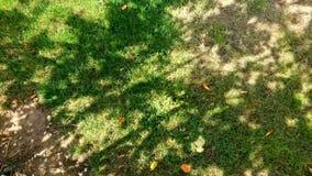 Dappled tree shadows stock video