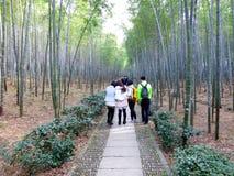 Daqishan national Forest Park bamboo Stock Photo