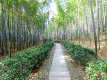 Daqishan national Forest Park bamboo Royalty Free Stock Photo